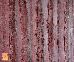 Texture in red woods painting