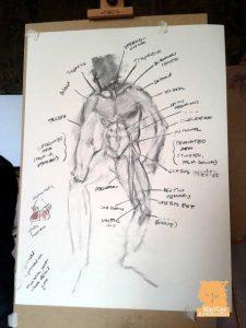 Artist Anatomy Workshop