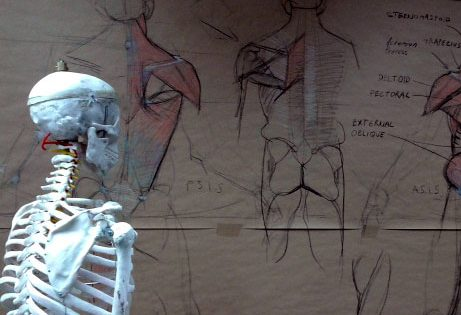 Anatomy Workshop