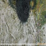 Detail: Sheep Painting Texture