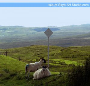Passing place sign with sheep on Isle of Skye