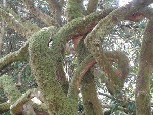 Colours of Skye Spring: Trunks