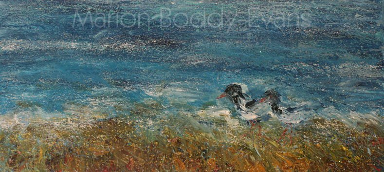 Painting in Progress: Oyster Catchers by Scottish Skye artist Marion Boddy-Evans