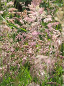 Grasses Skye Scotland