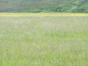Croftland Skye Scotland