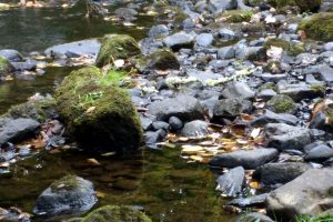 Reflections in Water, River Rock