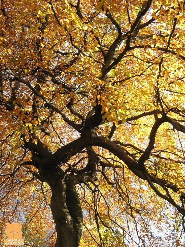 Autumn leaves Edinburgh