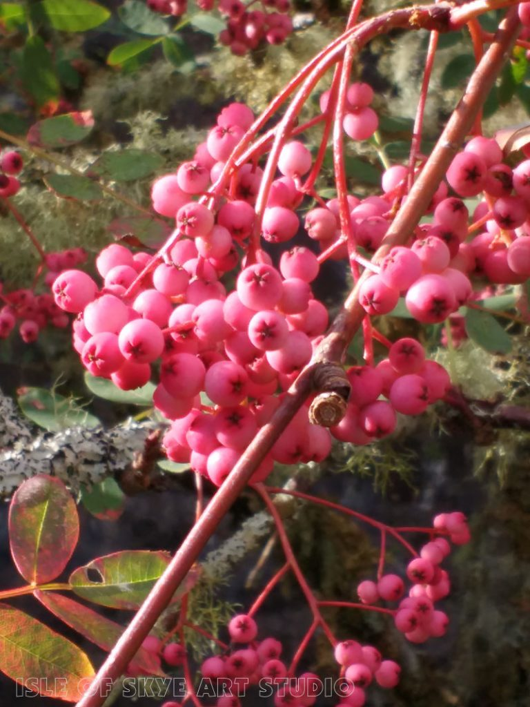 dunvegan-castle-pink-berrie