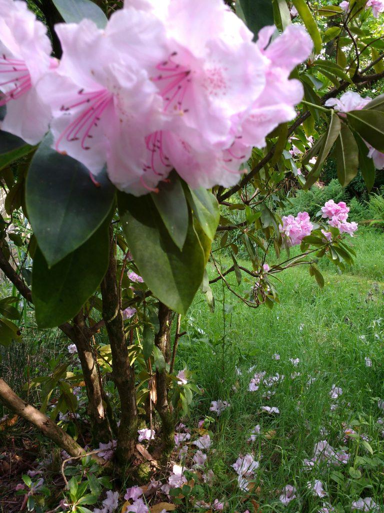Higham Hall Garden May 2017