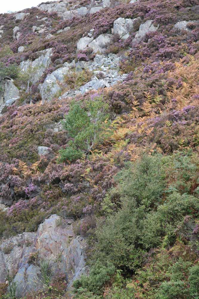 Heather colours Kyle