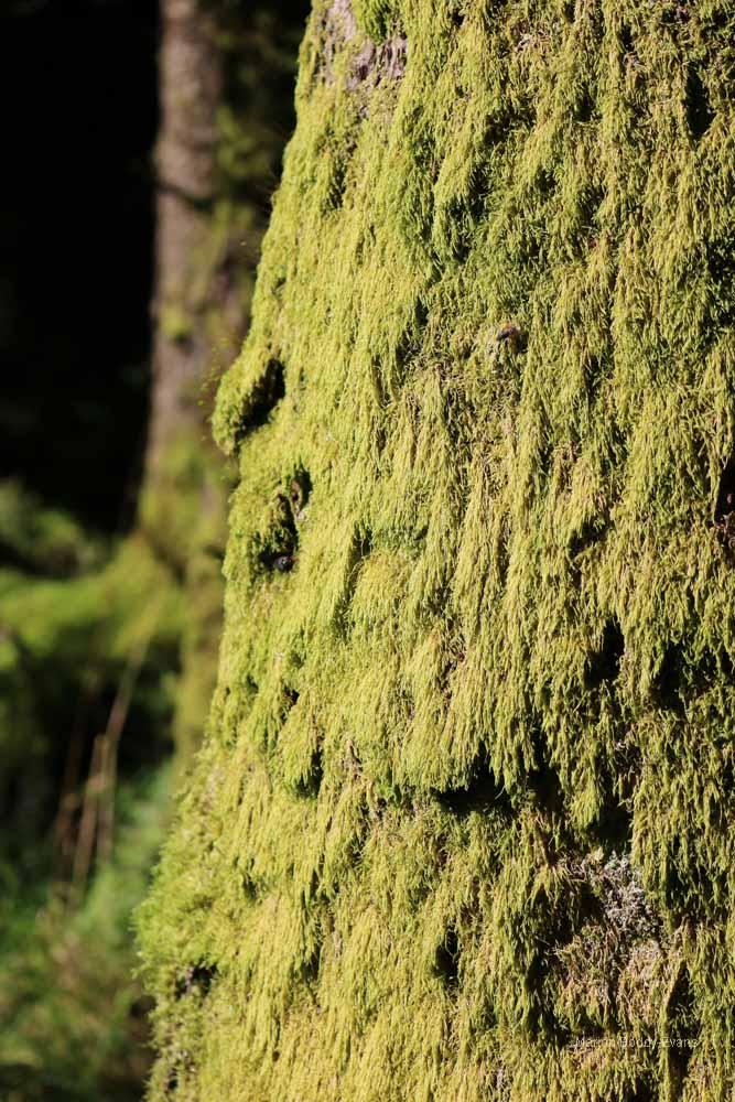 Moss on tree trunk Skye