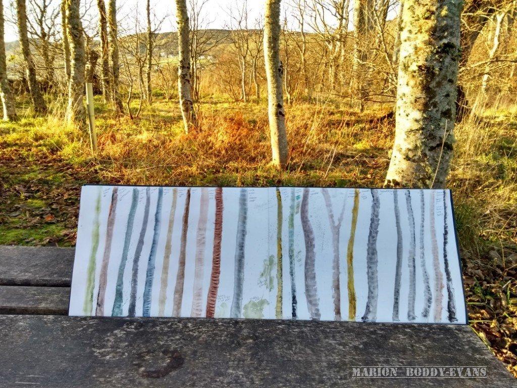 Colour studies tree trunks