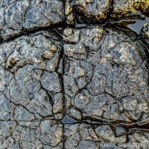Dinosaur brain fossils Isle of Skye (not)