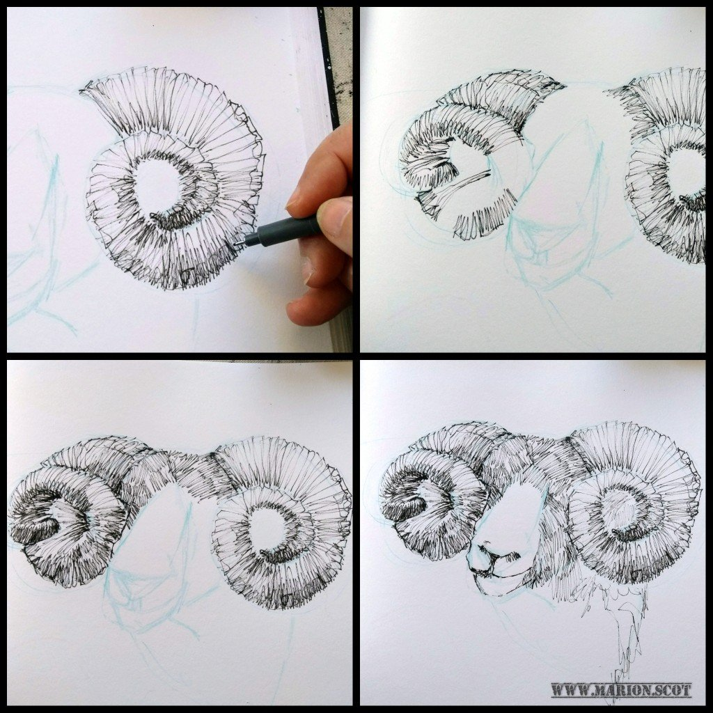 drawing ram horns in ink