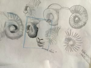 Sheep drawing studies by Cathi
