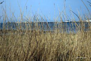 uig pier through reeds