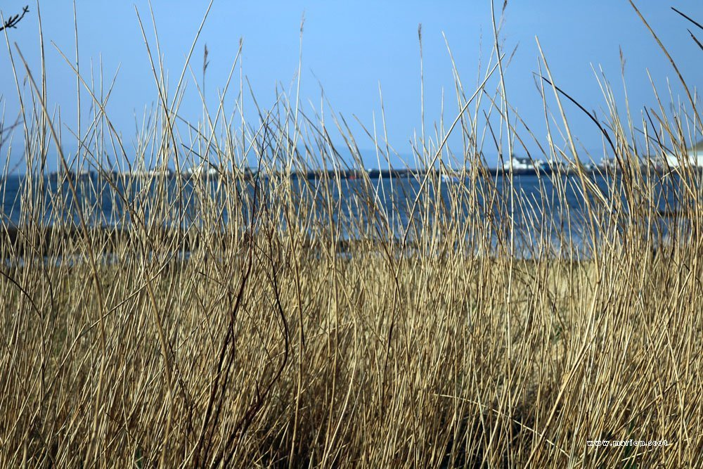 uig pier through reeds