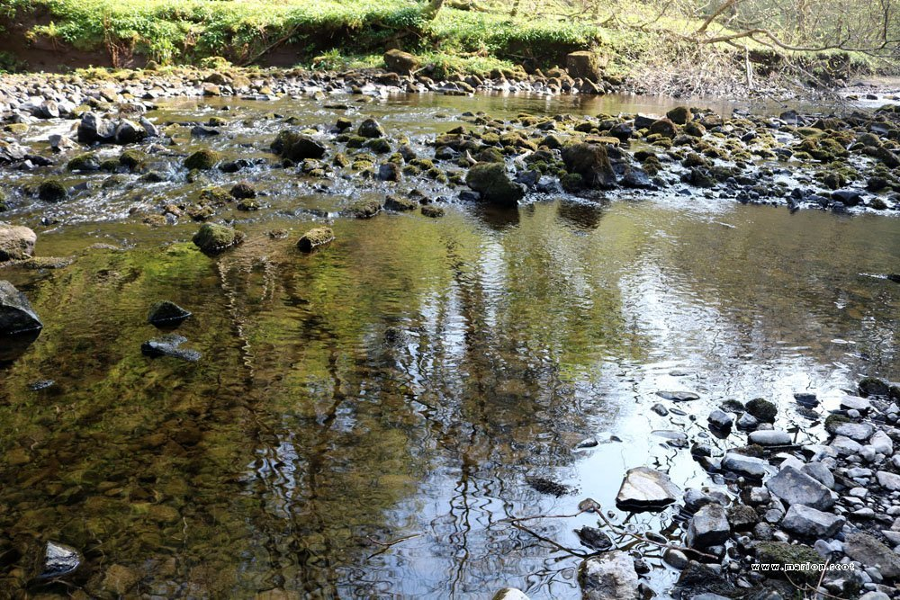 reflected trees in stream