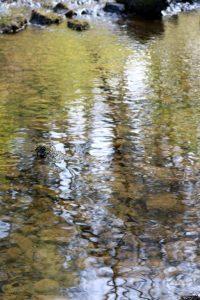 river ripples