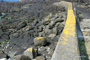 yellow lichen sea wall