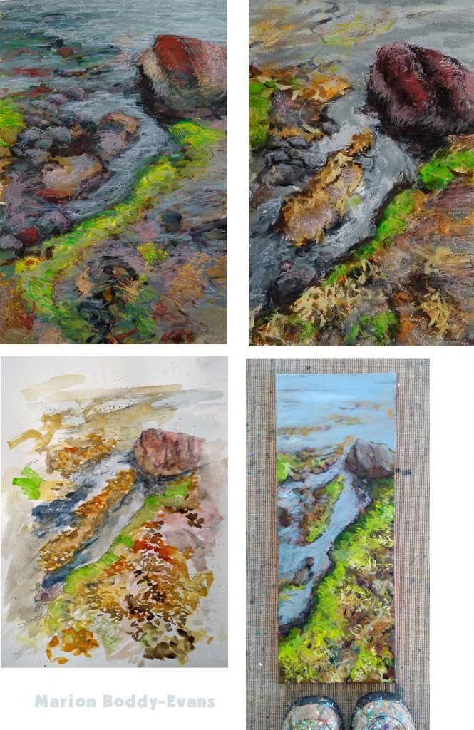 Four paintings of seaweed rocky shore by artist Marion Boddy-Evans