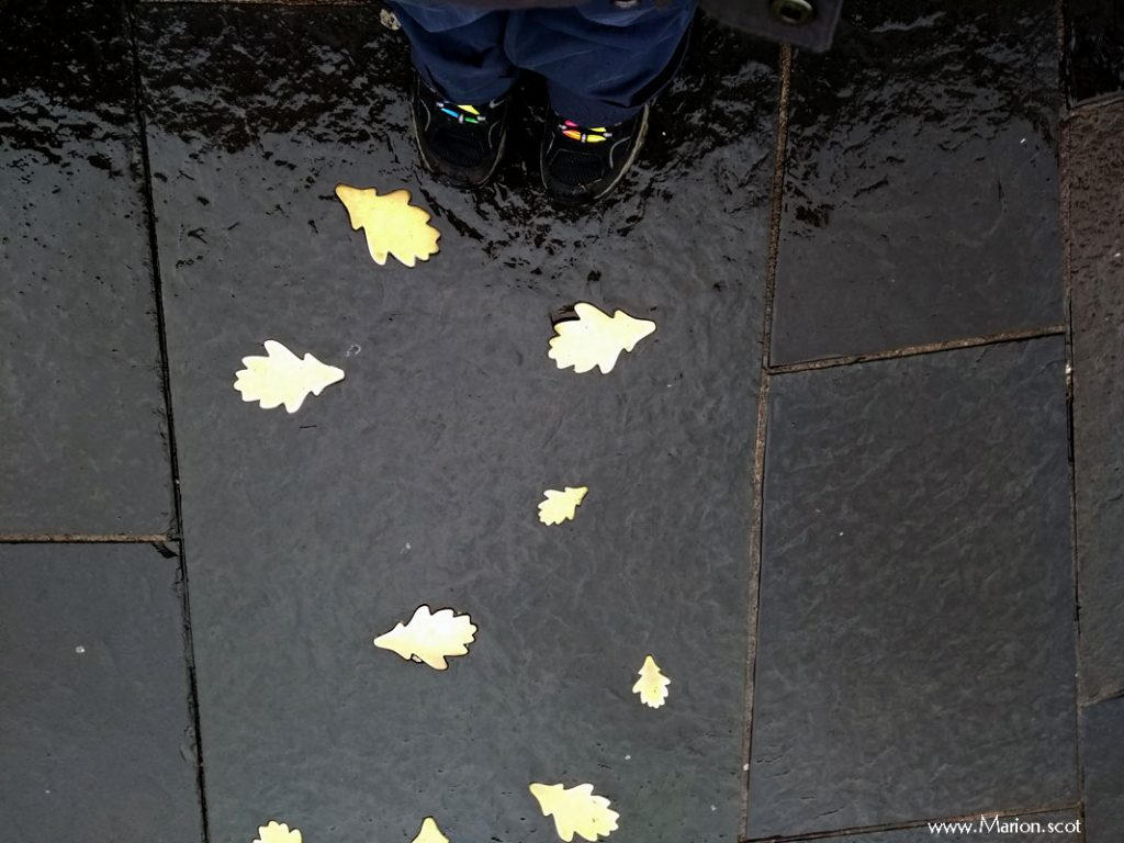 Look down Leaves inset in pavement