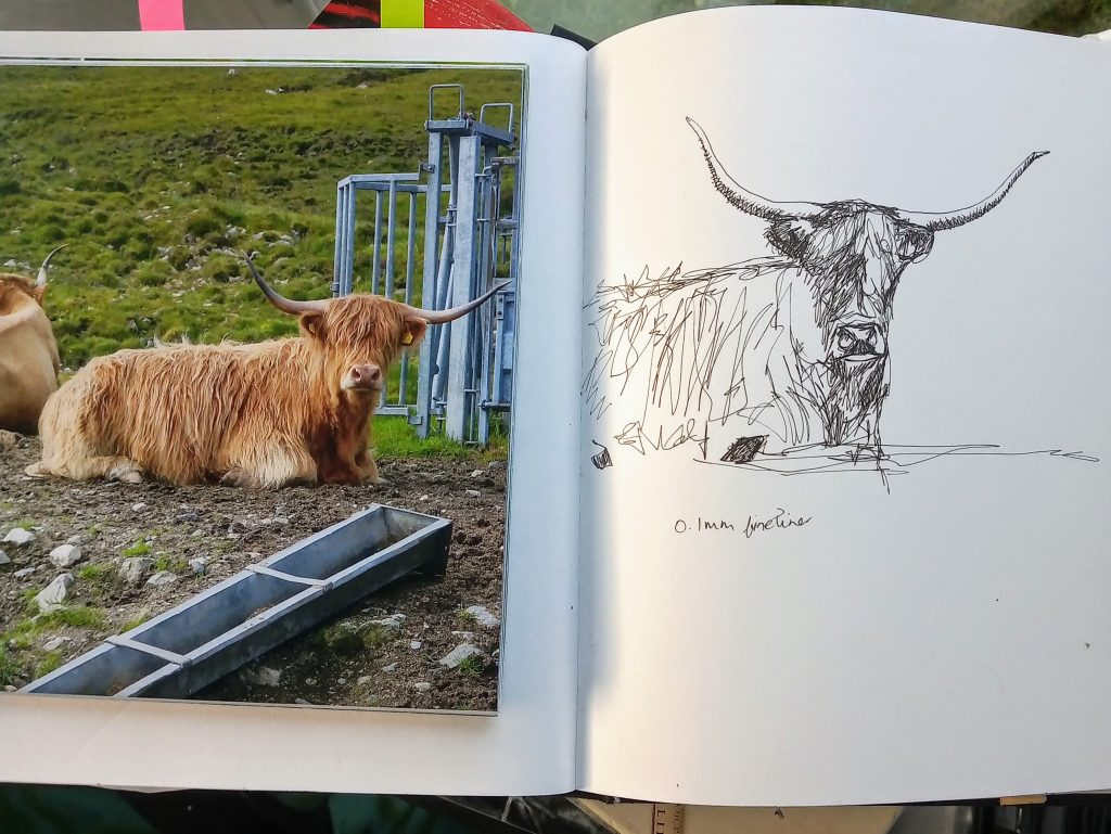 Highland cow sketch in ink