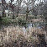 Trees in Uig woodland, Isle of Skye