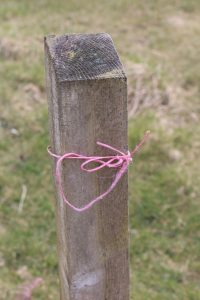 Pink Crofter's Twine on fence post