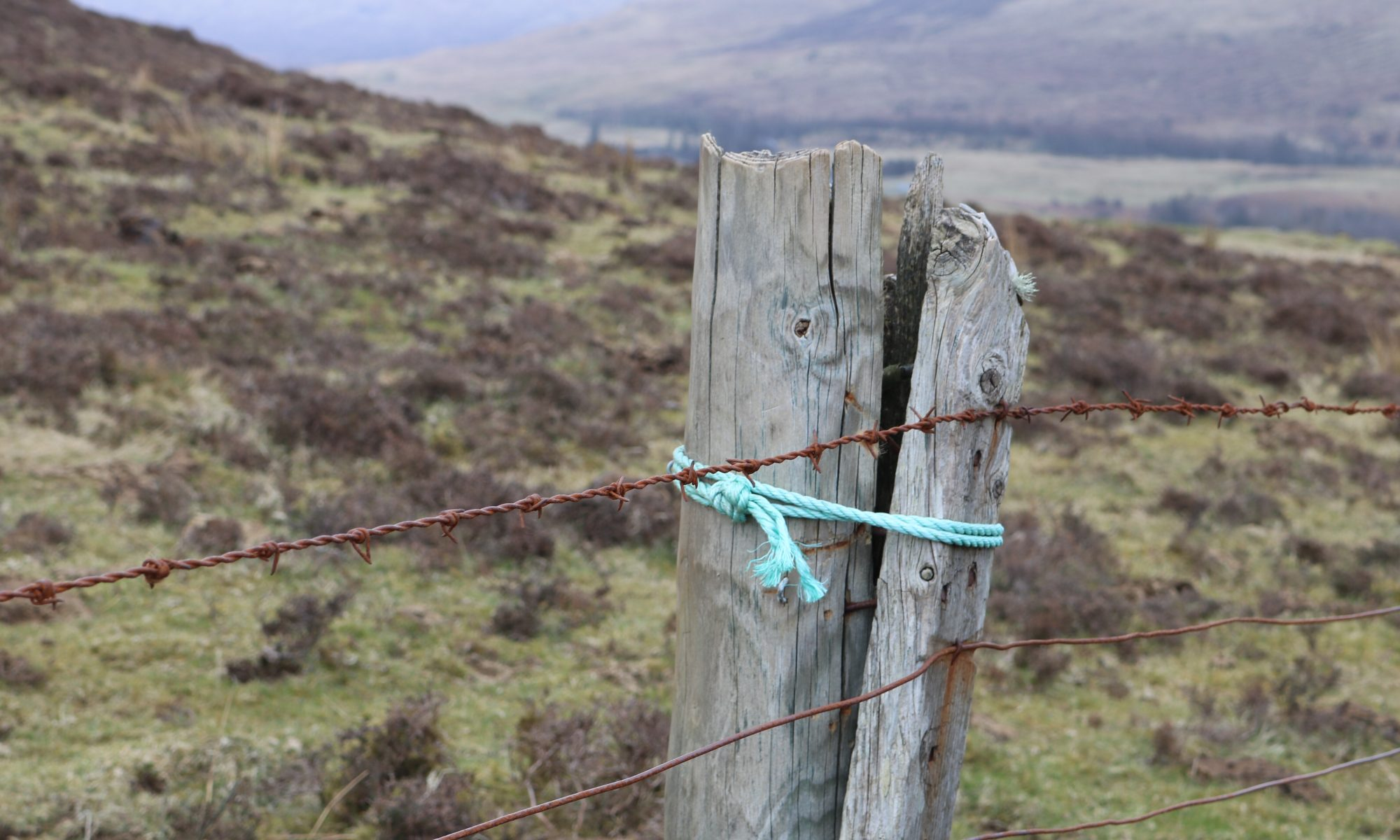 Crofter's Twine on fencepost