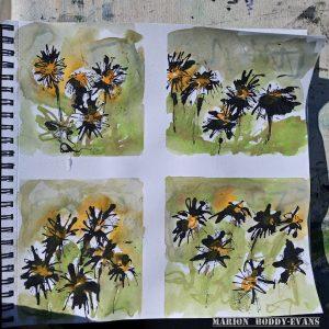 lawn daisies in watercolour